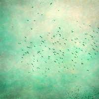 birds IV Art Print by Claudia Drossert