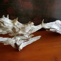 Driftwood Tree Root for Aquarium Terrarium  Decoration.  Nice Shape. Very Solid. Drift Wood Fish Tank or Reptile Decor. Rustic Beach Cottage