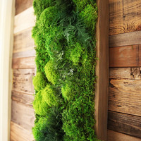 "40"" x 18"" LARGE Real Preserved Moss & Ferns in Reclaimed Wood Frame. Plant Painting- No Care Green Wall Art."