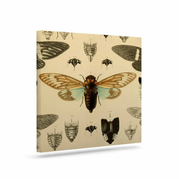 "Suzanne Carter ""Vintage Cicada"" Bugs Pattern Canvas Art"