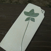 Rare FIVE Leaf Clover---Pressed and Preserved on Durable, Antique Tinted Cardboard---FREE SHIPPING