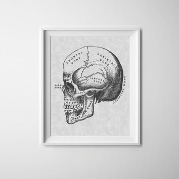 Vintage skull illustration, grey and black line drawing print, art for the home, home decor prints, quirky art poster, human skull print
