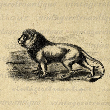 Lion Cat Wild Animal Antique Graphic Digital Image Download Printable Vintage Clip Art for Transfers HQ 300dpi No.001