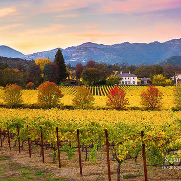 Wine Country Print, Napa Sunset Photo, California Wine Country, Napa Autumn Canvas, Wine Vineyard, Gallery Wrap, Winery, Large Wall Decor