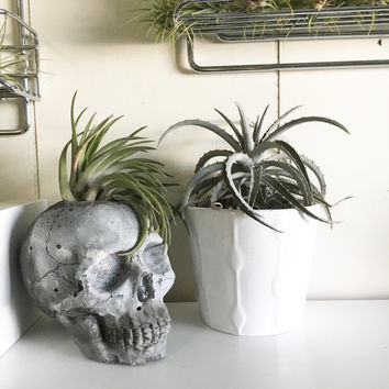 Concrete skull for air plant