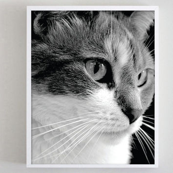 Photography Print Cat Black and White Kitten Animal Photography
