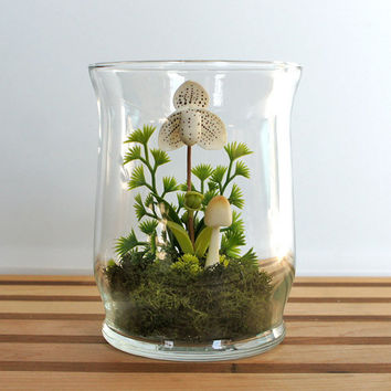 White Lady Slipper Orchid Terrarium in Repurposed by MissMossGifts