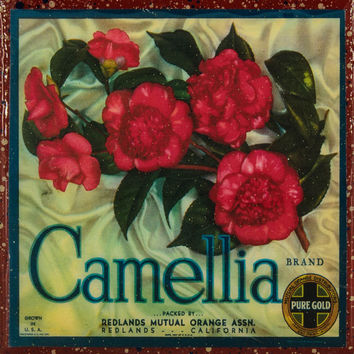 Camellia Brand - Vintage Citrus Crate Label - Handmade Recycled Tile Coaster