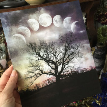 Terri Foss Photography Print 8x10 Lunar Luna Moon Phases Phase Tree of Life Metaphysical Nature