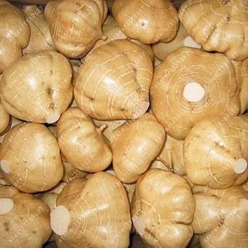Real sweet potato seeds organic seeds vegetables jicama / yam bean seeds garden plant 20 pcs/bag