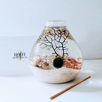 Japanese Marimo Aqua Terrarium, Crushed Pearl Teardrop Moss Ball Terrarium, Home Decor, Office Decor, Unique Gift
