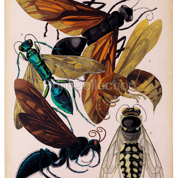 Insects, Plate 6 by E.A. Seguy