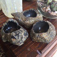 Fossilized Coral Planters
