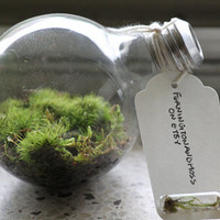 Canadian Handmade Light Bulb Terrarium by ferningtonandmoss
