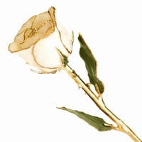 24k Gold Plated Trim White Rose