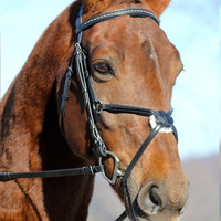 Red Barn Phoenix Comfort Crown Figure 8 Bridle