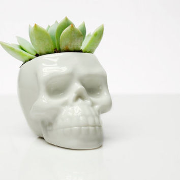 Dead Human Skull Succulent Pot | White Ceramic Mini Cactus Plant DIY Potted Desktop Balcony Vase Home Decor Planter