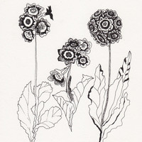Stems No.2 - Original Ink Drawing