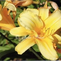 Set of 2 Handmade Photo Yellow Lily Flower Note Cards