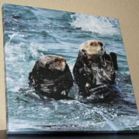 Sea Otter Square Photo Canvas 12x12 Fine Art Canvas Nature and Wildlife Photography