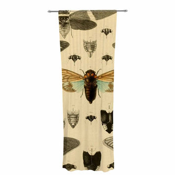 "Suzanne Carter ""Vintage Cicada"" Bugs Pattern Decorative Sheer Curtain"