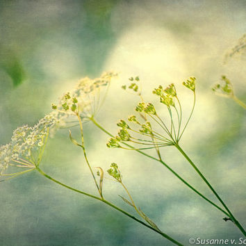 Nature Photography, Delicate Spring Flower, Queen-Ann's-Lace, Floral Print,  Fine Art, Green Yellow  Blue Pastels, Wall Decor