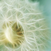 Dandelion photography fractal art fine art photography surreal wall decor feminine wall art pale blue white photo print bedroom decor