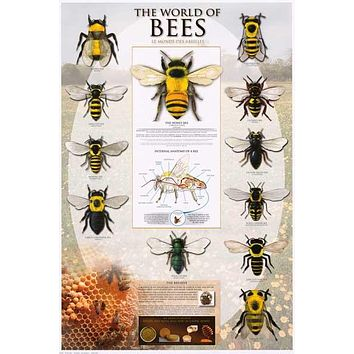 The World of Bees Beekeeping Infographic Poster 24x36