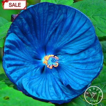 Promotion!Red Giant Hibiscus Flower Seed Beautiful Flower Bonsai Plant DIY Home Garden 50 Seeds / lot,#OEYL6U