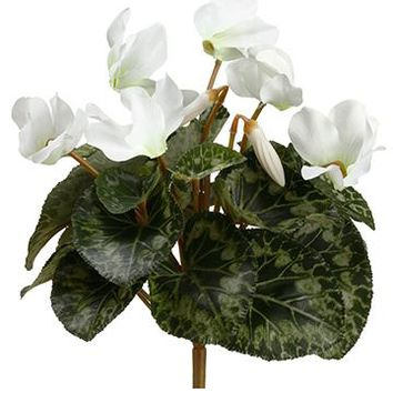 "White Silk Cyclamen Winter Flower Bush - 11"" Tall"