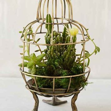 Plum & Bow Birdcage Terrarium- Gold One