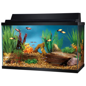 Top fin 10 gallon aquarium starter kit from pet smart for 20 gallon fish tank size