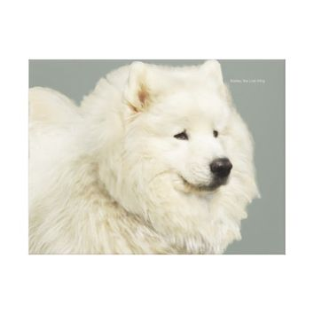 "Samoyed Portrait , 24"" x 18"",1.5"" Wrapped Canvas"