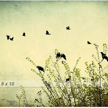 Birds Flying, Family of Crows in Spring Photo Download, nature, 8x10, Flock of birds, blackbirds, raven