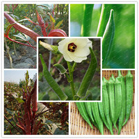 Best-Selling!!!100pcs/Lot Organic Okra Seeds Non GMO Good Taste For Garden Supplies For Fun Countryside Garden potted plants