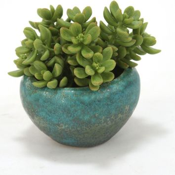 "6"" Succulent Stem In Rustic Turquoise Small Rounded Bowl (set Of 3)"
