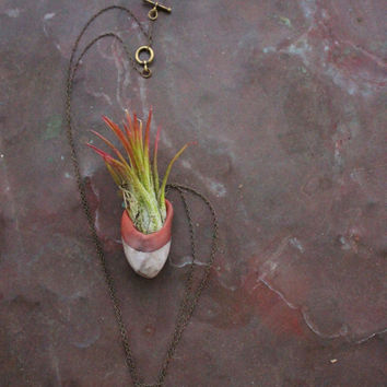 Living air plant necklace - navajo clay and Tillandsia on chain - Aero