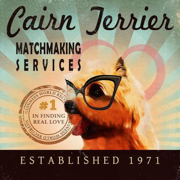Cairn Terrier - Matchmaking Services - 12X12 Modern Vintage Giclee Print - Mixed Media - LHA-296-13