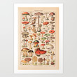 Vintage Mushrooms Art Print by Susan Najarian Design