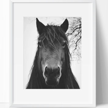Horse Wall Art Photography, Black and White Modern Art, Prints