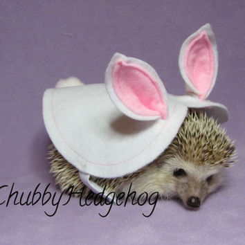 Hedgehog /Guinea pig EASTER BUNNY costume