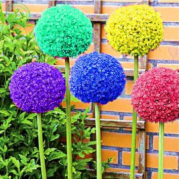 150 seed giant Allium giganteum beautiful flower seeds plant garden The grass rate 95% rare flower for children p41