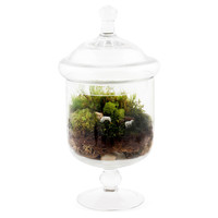 "10"" Grazing Sheep Terrarium, Live"