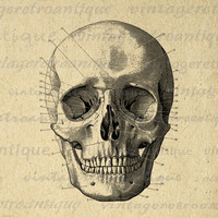 Skull Diagram Image Digital Download Printable Skull Illustration Graphic Vintage Clip Art for Transfers Printing etc HQ 300dpi No.2260