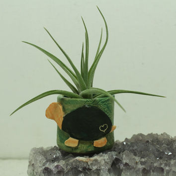 Turtle  Mini planter for Air Plant and moss Miniature planter