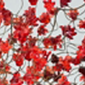 Chandelier lighting with Red flowers  - Chandelier Ceiling Light Red jumping flowers for dinning room or living room.