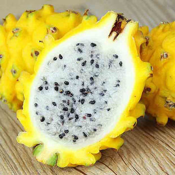 100 Yellow Pitaya Seed | Dragon Fruit Amarilla Hylocereus | Tropical Perennial Cactus Nutritious Undatus Vegetable Home Garden Plant Organic