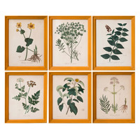 Set Of 16 Mid 19th Century Botanical Prints In Handmade Frames