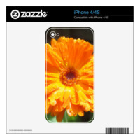 Sunny Calendula Raindrops iPhone 4 Skin