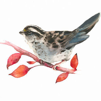 White Throated Sparrow- Archival print-  bird art, christmas